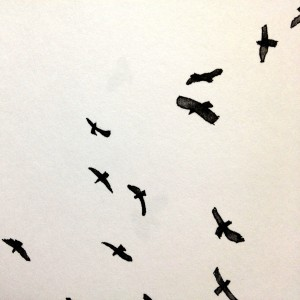 Raptor silhouettes by Betsy Bowen