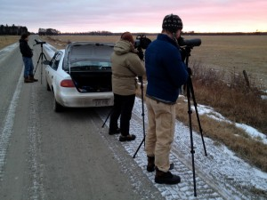 scanning for Sharp-tailed Grouse