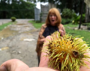 Rambutan - to eat me is to love me